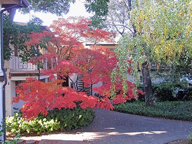 Loma Vista Courtyard